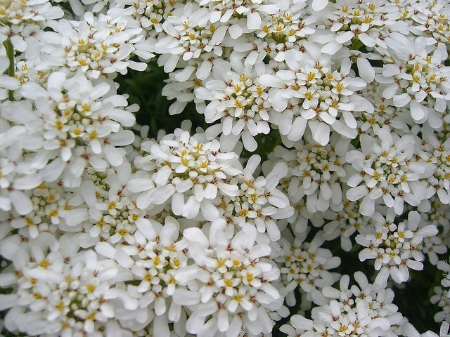 botanicheskiy-sad-oslo-07