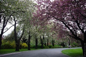 Сад города Осло