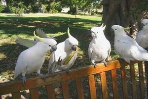 Ботанический сад Сиднея