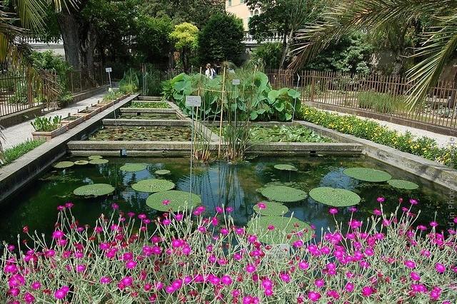 Ботанический сад в Падуе 08