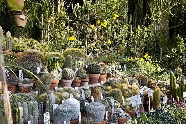 Ботанический сад в Падуе 10