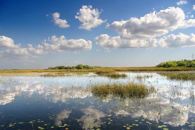 nacionalnyj-park-everglejds-06