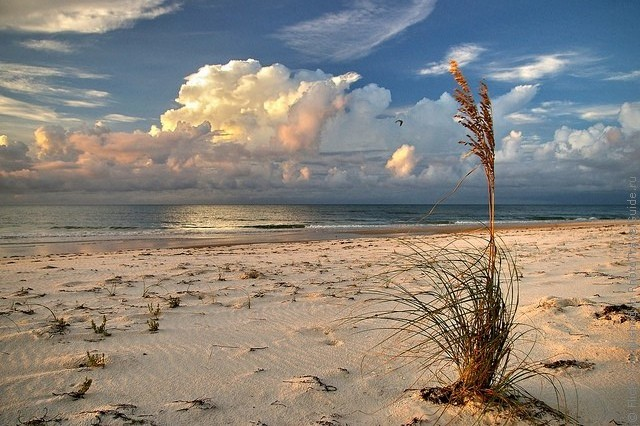 top10-st-george-island-state-park