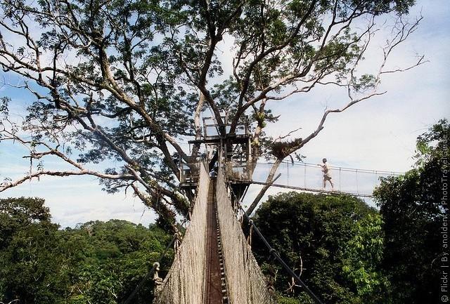 Подвесные мосты на деревьях, Икитос, Перу.