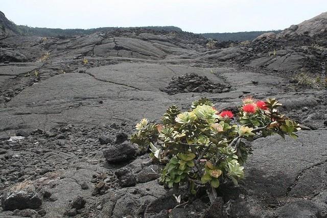 gavayskie-vulkany-06