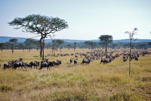 top10-safari-nacionalnyj-park-serengeti-1
