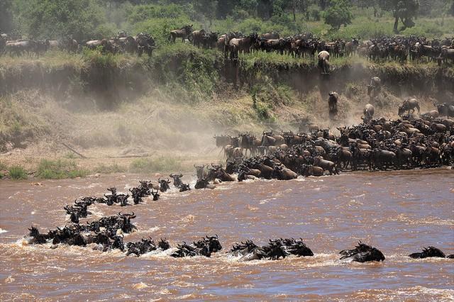 top10-safari-nacionalnyj-park-serengeti-2