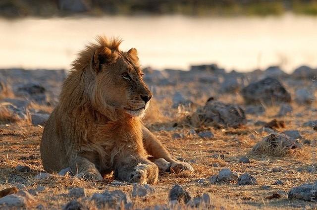 top10-safari-natsionalnyi-park-etosha-1