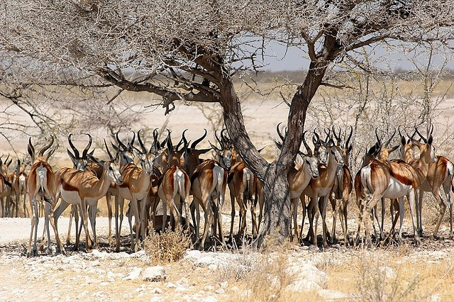 top10-safari-natsionalnyi-park-etosha-2