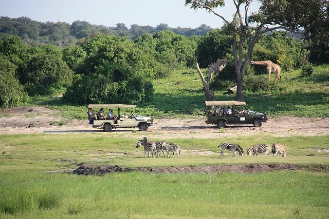 top10-safari-natsionalnyij-park-chobe-2