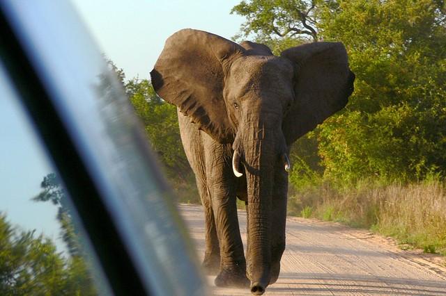 top10-safari-natsionalnyy-park-kryugera-2