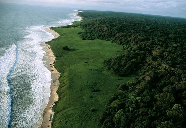 top10-safari-natsionalnyy-park-loango-1