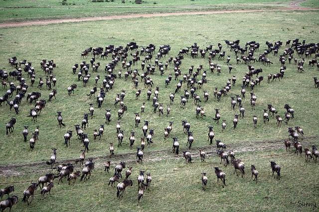 top10-safari-zapovednik-masai-mara-2