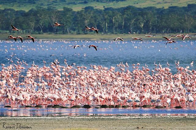 top10-safari-zapovednik-ngorongoro-2