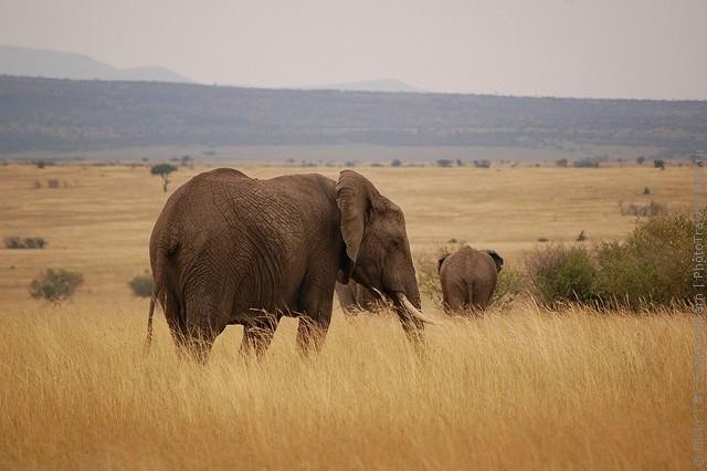 zapovednik-masai-mara-03