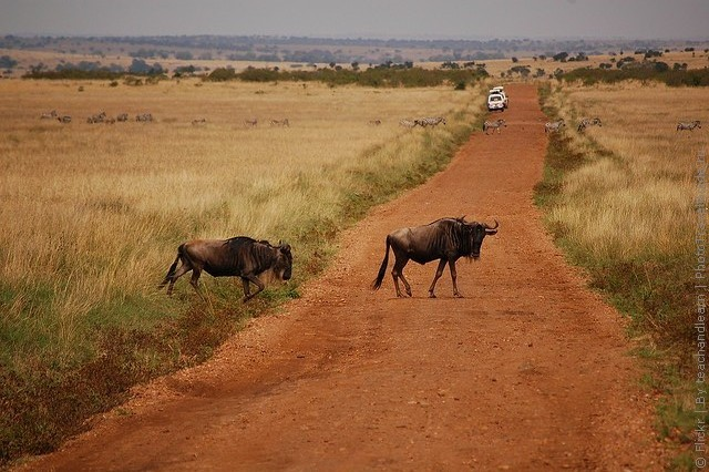 zapovednik-masai-mara-06