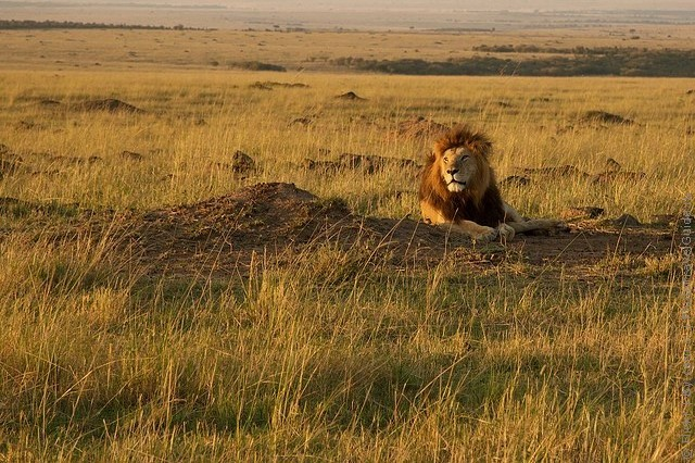 zapovednik-masai-mara-12