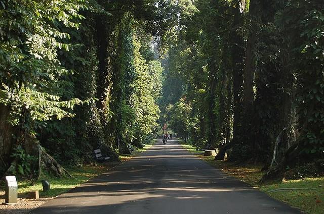 bogorskiy-botanicheskiy-sad-20