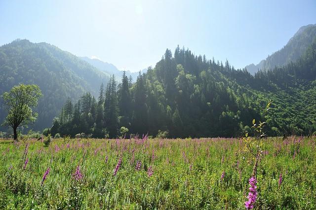 nacionalnyy-park-czyuchzhaygou-19