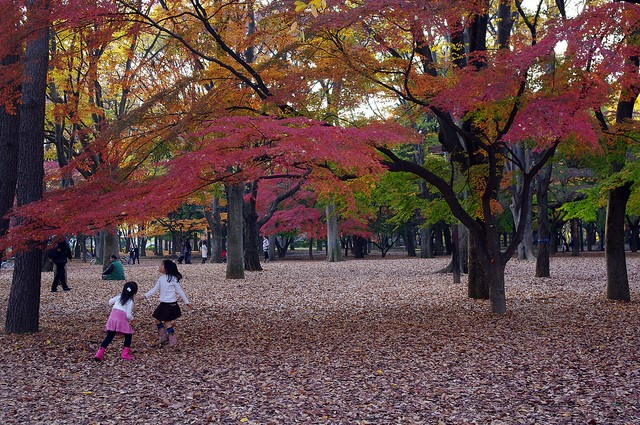 yoyogi-park-07