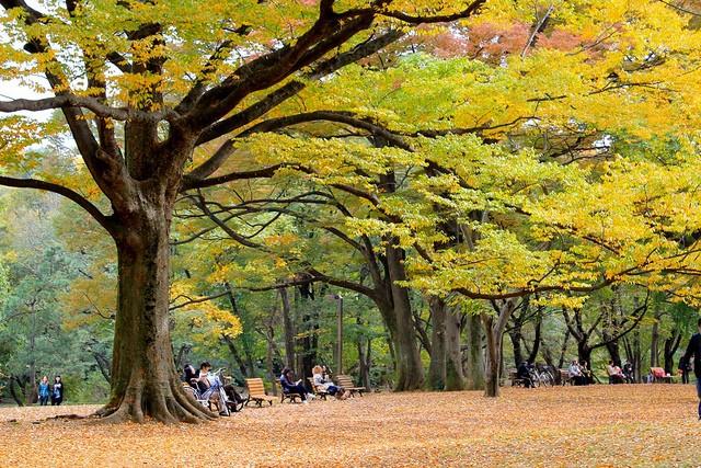yoyogi-park-18
