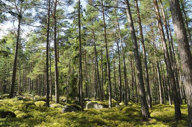 natsionalnyi-park-lahemaa-05