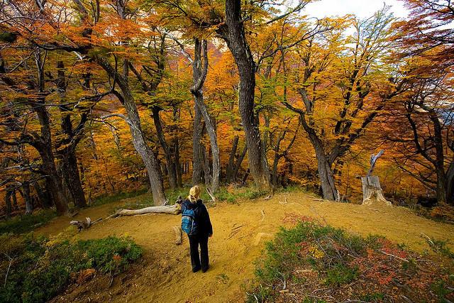 nacionalnyj-park-nauel-uapi-13