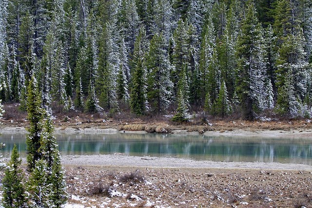 icefields-parkway-08