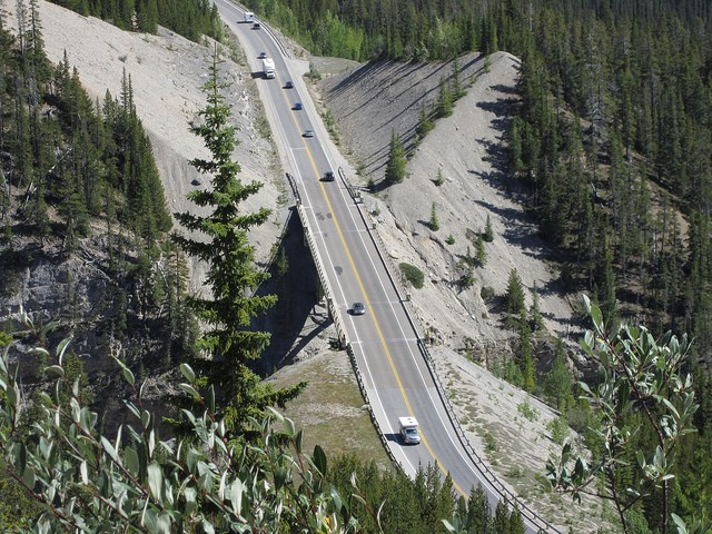 icefields-parkway-14