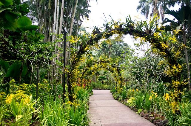 singapurskij-botanicheskij-sad-02