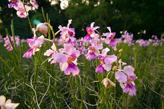 singapurskij-botanicheskij-sad-06