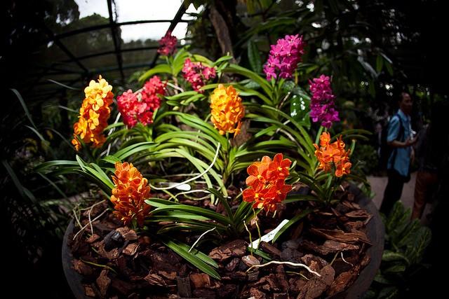 singapurskij-botanicheskij-sad-11