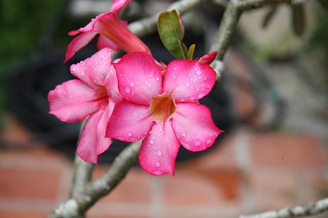 botanicheskiy-sad-andromeda-19