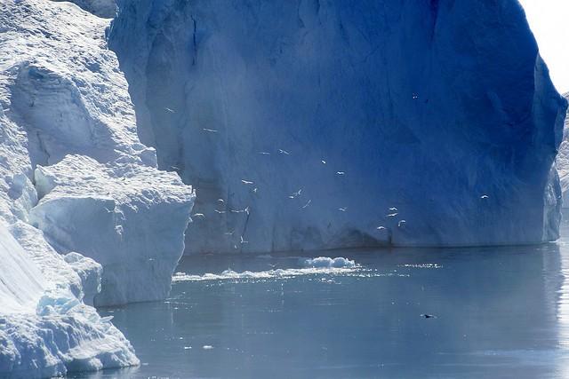 fiord-ilulissat-14