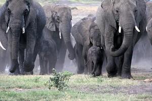 Парк Хванге, Зимбабве