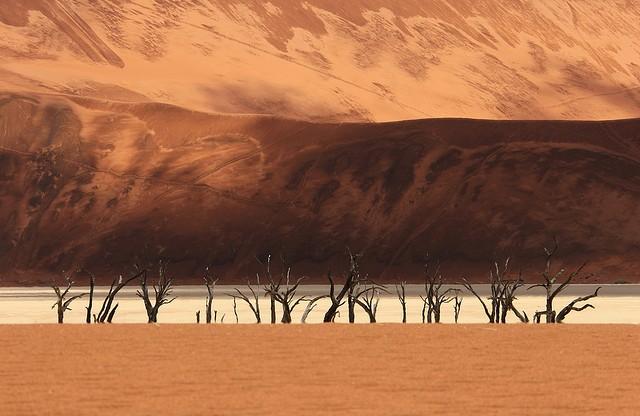 pustynya-namib-14