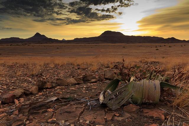pustynya-namib-19