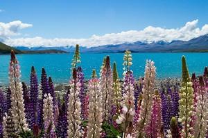 Озеро Текапо, Новая Зеландия