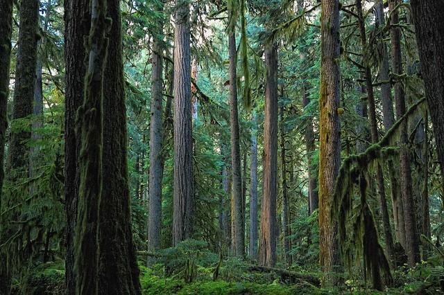 mount-rainier-national-park-11