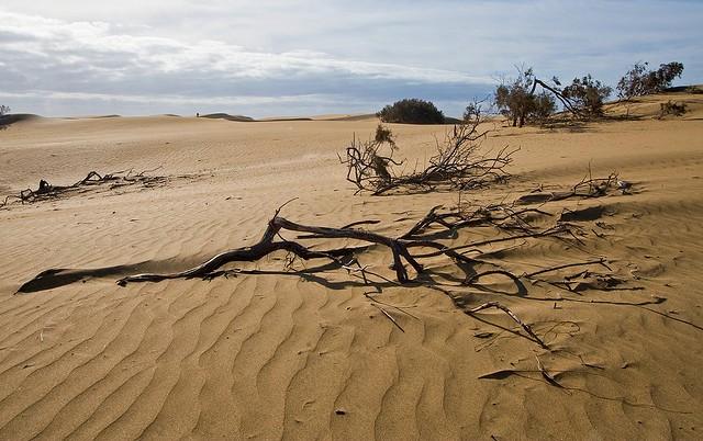 дюны маспаломаса как добраться