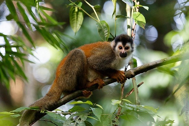 Manuel-Antonio-National-Park-05