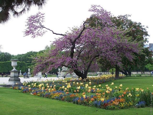 Картинки по запросу париж сады парки