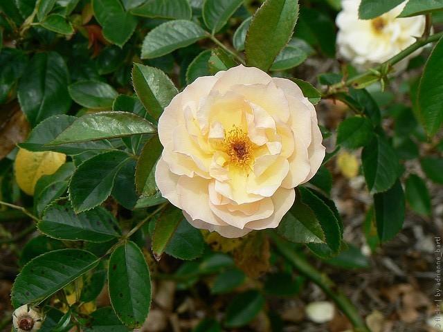 korolevskie-botanicheskie-sady-sidneya-09