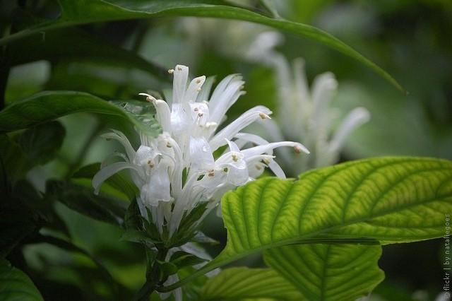korolevskie-botanicheskie-sady-sidneya-12