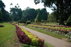 Ботанический сад в Перадении
