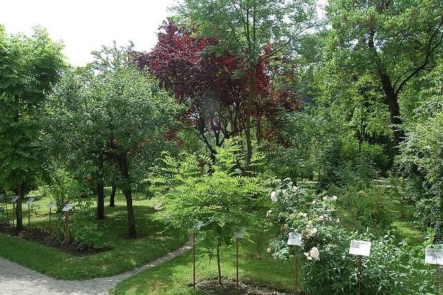Ботанический сад в Падуе 04