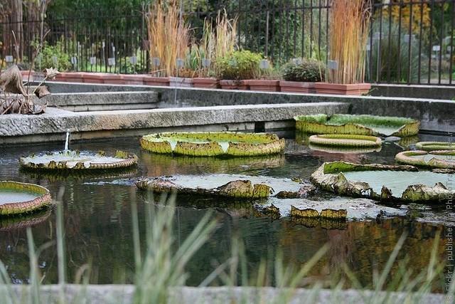 Ботанический сад в Падуе 11