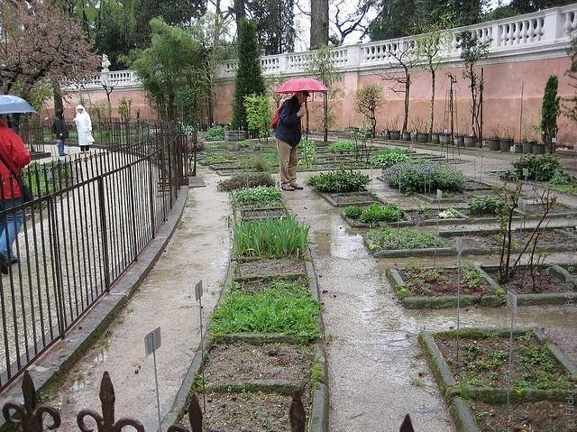 Ботанический сад в Падуе 13