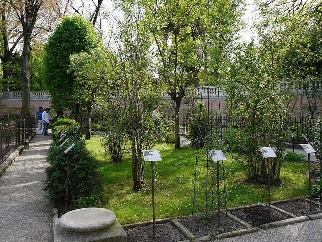 Ботанический сад в Падуе 15