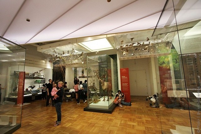 korolevskij-muzej-ontario-13